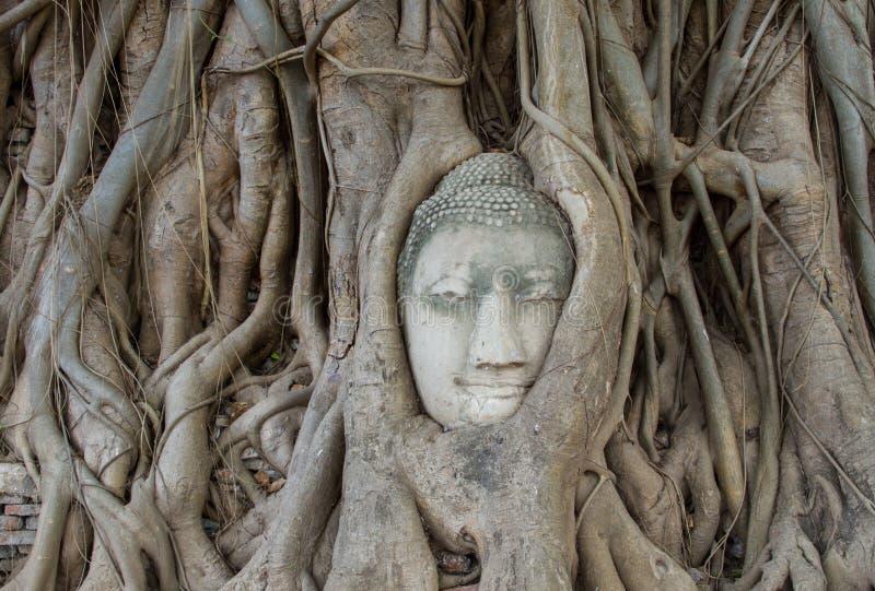 Buddha-Statue in den Wurzeln des Baums an, Ayutthaya, Thailand stockfotografie