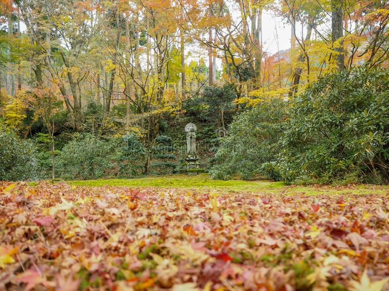 Buddha statue  in japanese temple garden with colorful red maple leaves for background. And copy space, Kyoro, Japan royalty free stock photography