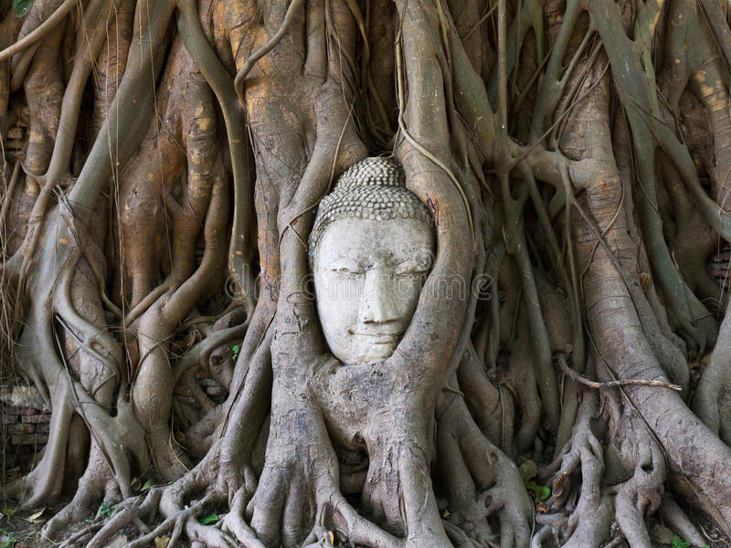 Download Buddha Statue In The Roots Of Tree Stock Photo - Image: 24565794
