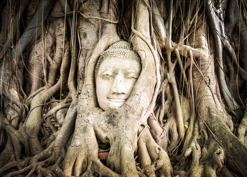 Buddha statue in the roots of tree. At Ayutthaya, Thailand royalty free stock photography
