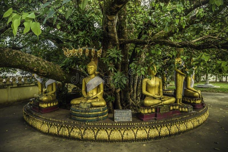 Buddha-Statuen für sieben Tage stockfotos