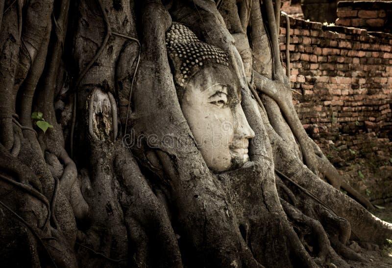 Buddha statuy zadziwiać fotografia royalty free