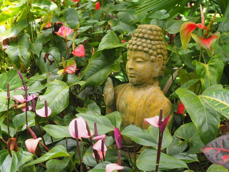 Buddha in the undergrowth stock photo