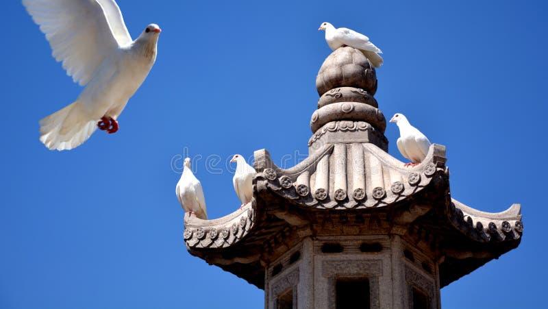 Buddha välsignar fred fotografering för bildbyråer