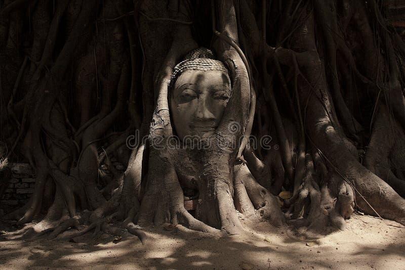 Buddha wizerunku głowa wtykająca w drzewie fotografia stock