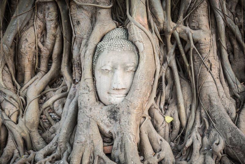 Buddhahuvud i Wat Mahatat royaltyfri bild
