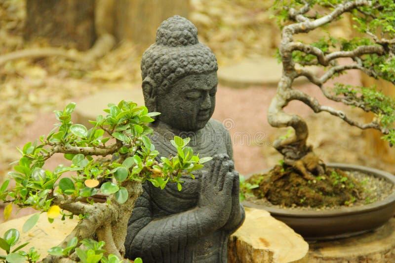 Buddhastaty med bonsaiträd, bonsaiträdutställning på Pune arkivbild