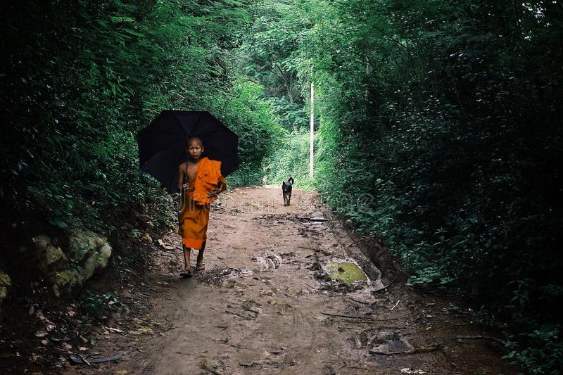 buddhist monk walking home with an umbrella stock photos