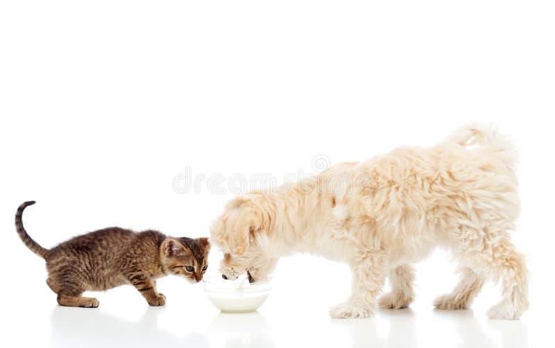 Buddies at the feeding bowl - dog and cat eating royalty free stock image