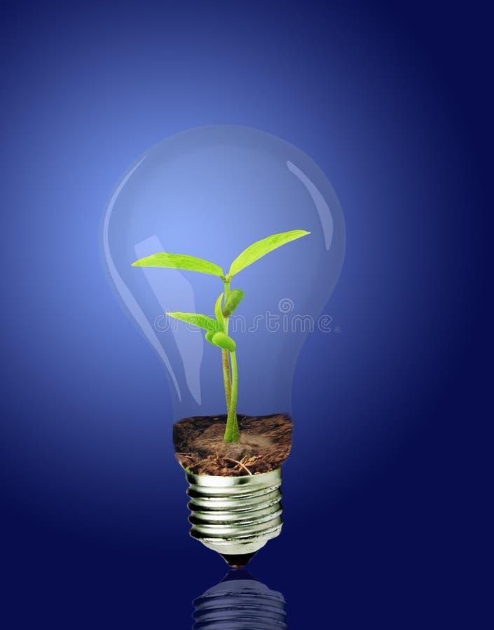 Download Budding and bulbs stock image. Image of environmental - 17882889