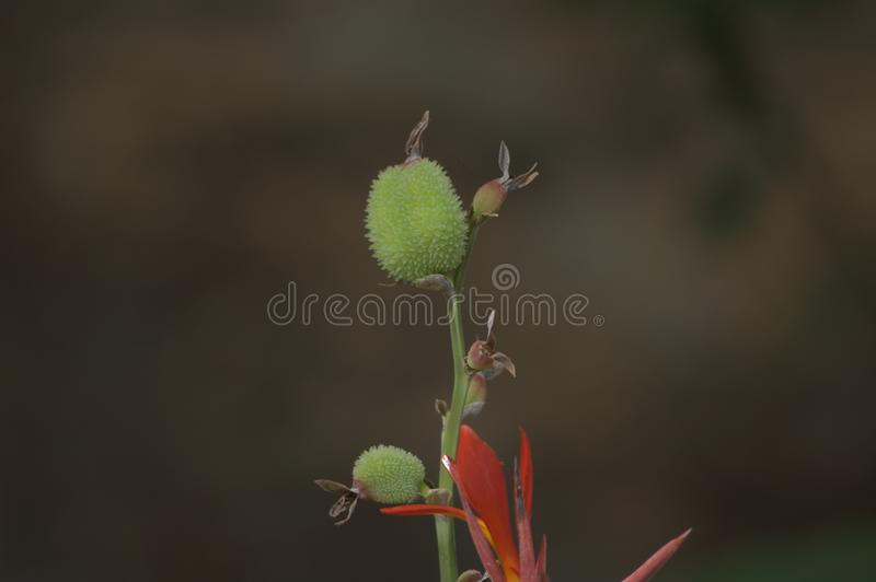Budding life in the Floridian wild. royalty free stock photos
