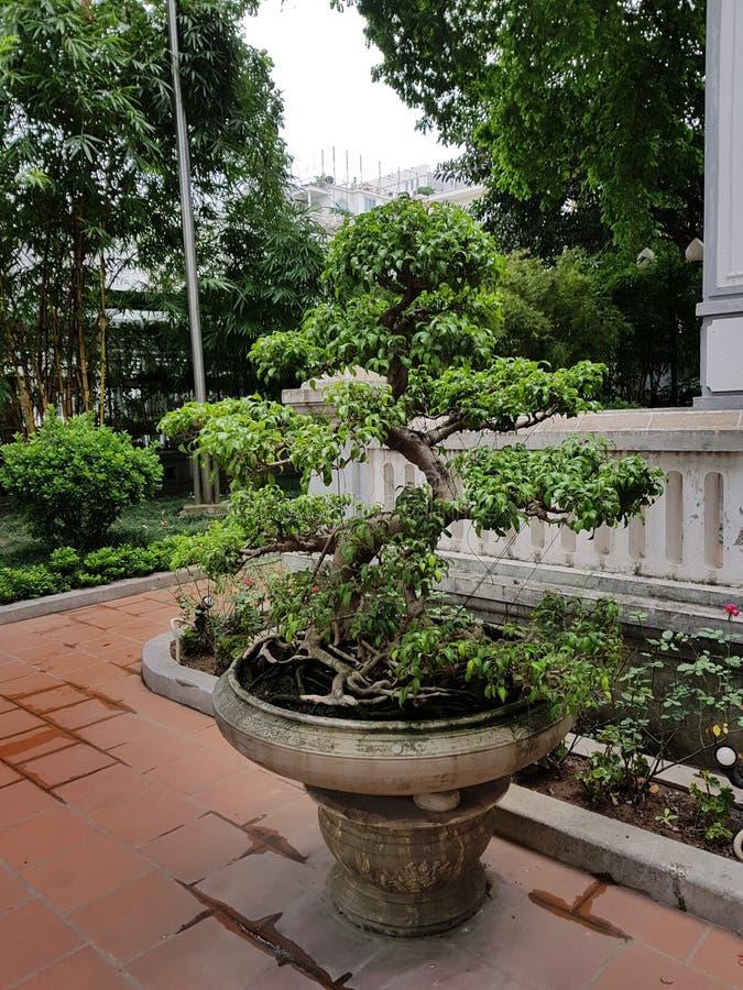Buddistisk bonsai royaltyfria bilder