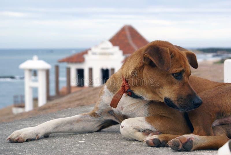 buddistiskt hundtempel arkivfoto