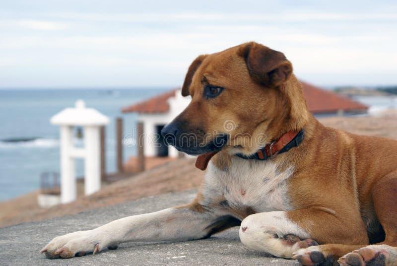buddistiskt hundtempel royaltyfria foton