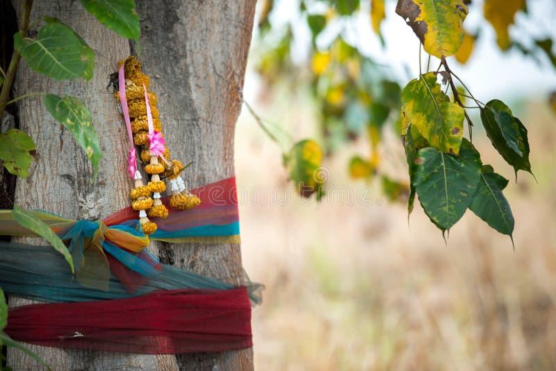 buddyjski świętego drzewa zdjęcia royalty free