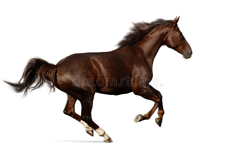 Budenny horse gallops royalty free stock photography