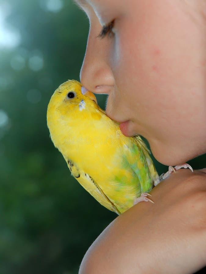 Budgerigar de beijo da menina fotos de stock royalty free