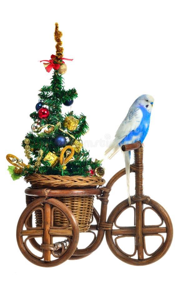 Budgerigar, der Baum des neuen Jahres auf dem Dreirad trägt lizenzfreie stockbilder