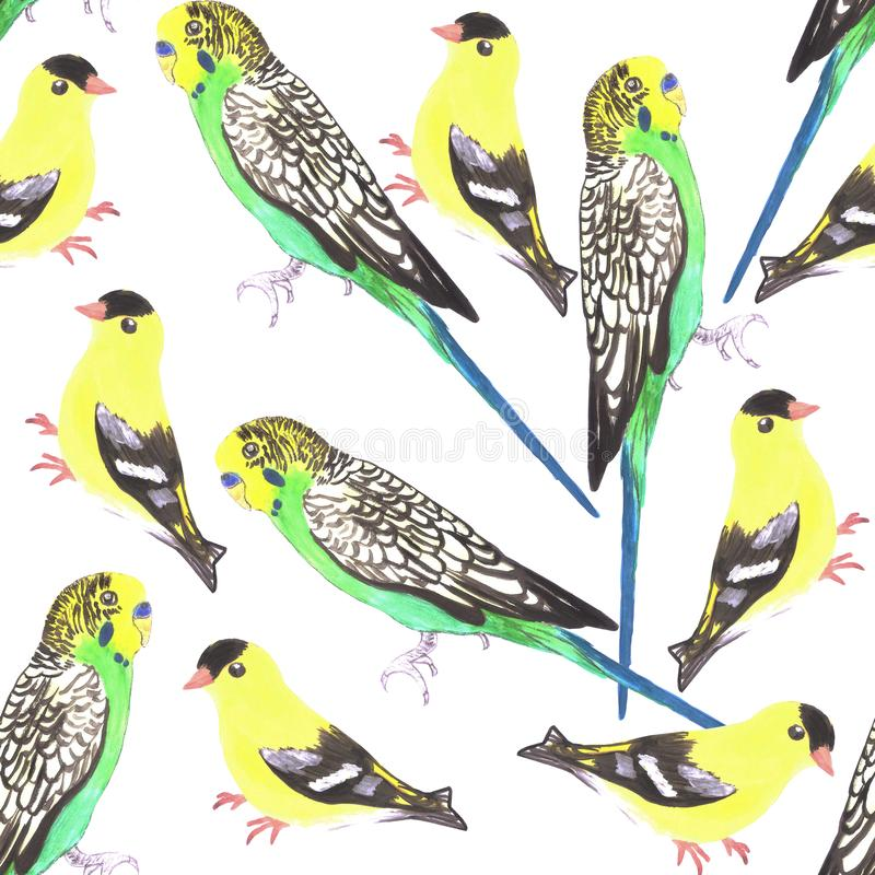 Budgies and american goldfinches seamless watercolor background in vibrant color scheme. Budgies and american goldfinches seamless watercolor background in vector illustration