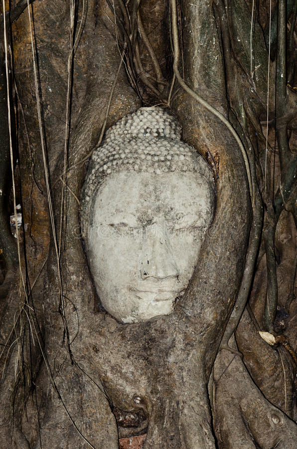 Budhas Head Gripped By Tree Roots Royalty Free Stock Photo