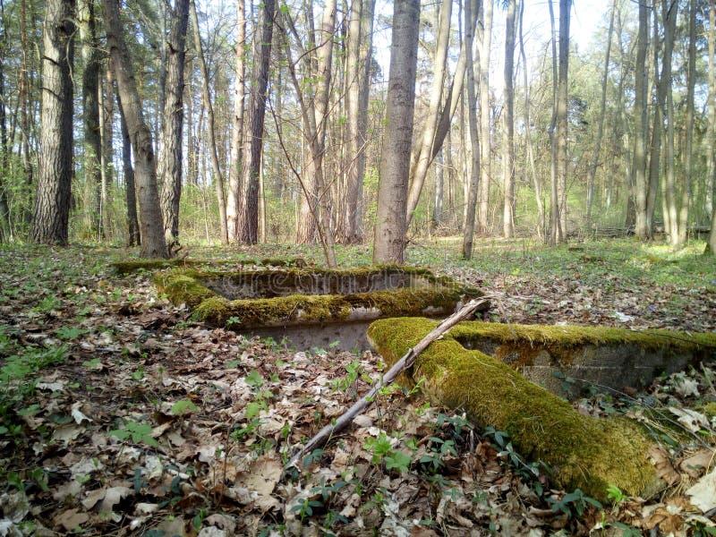 Budowa w lesie zdjęcia royalty free