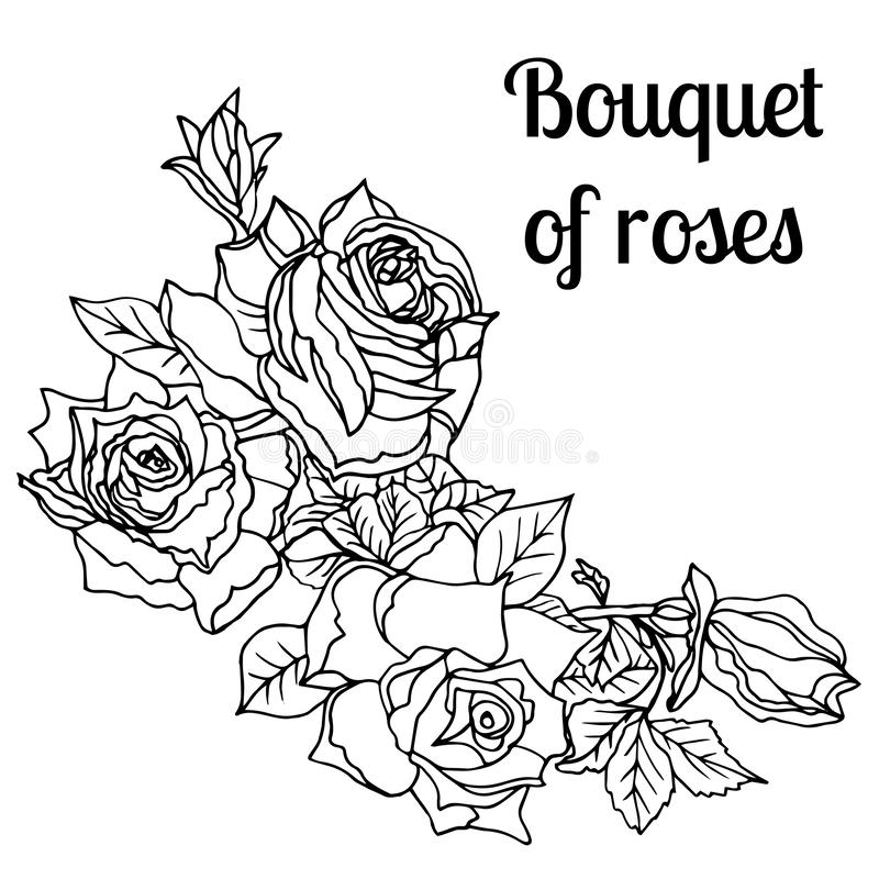 Ink rose plant with flowers and buds bouquet. Buds, leaves, stem and elegant flowers for your design. Hand drawn tattoo vector, etch style stock illustration