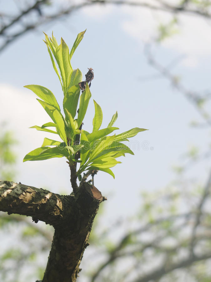 Download Buds and shoots burst stock image. Image of rise, leaf - 37693111