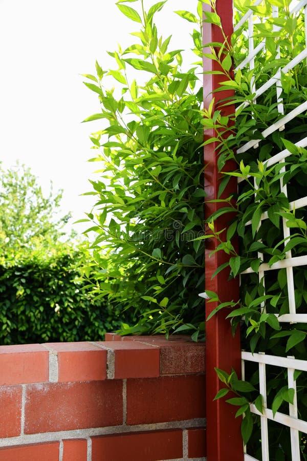 Budująca ściana i drewniany ogrodzenie z liśćmi krzaka dorośnięcie przez siatki - Zielony ogród fotografia stock