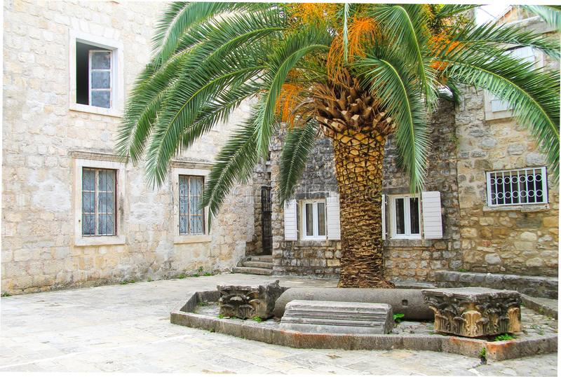 Budva, Montenegro. Big green palm tree in the courtyard of an old house in the Old Town. Of Budva royalty free stock photo