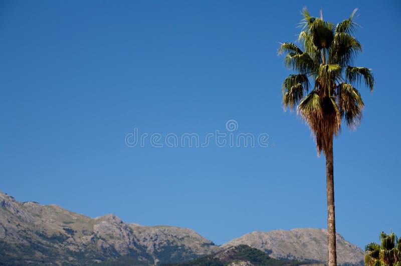 Budva Palm stock photos