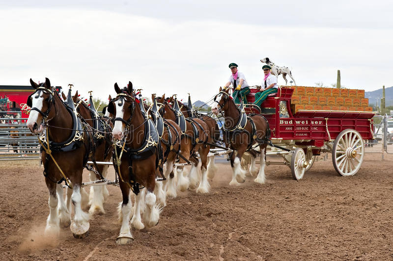 Budweiser Clydesdales imagem de stock royalty free