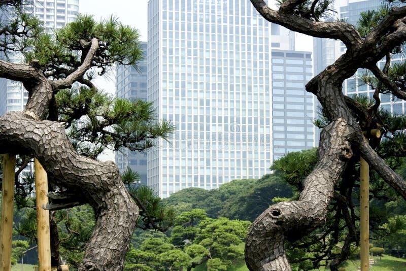 Budynek biurowy target764_1_ Japończyka ogród fotografia stock