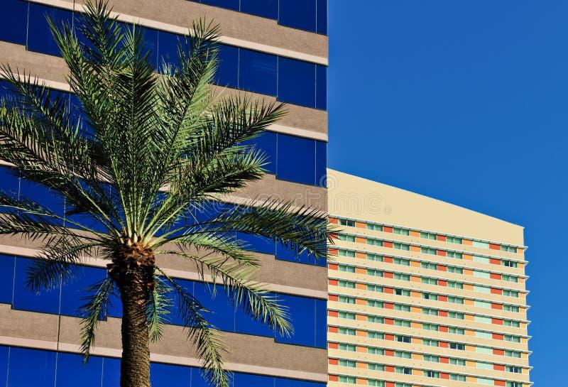 budynków biura drzewko palmowe zdjęcie stock