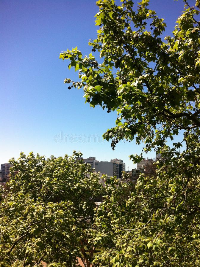 Budynki nad drzewami ale III, wcale nie fotografia royalty free