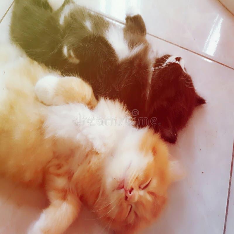 Buen gato del slepp fotografía de archivo libre de regalías