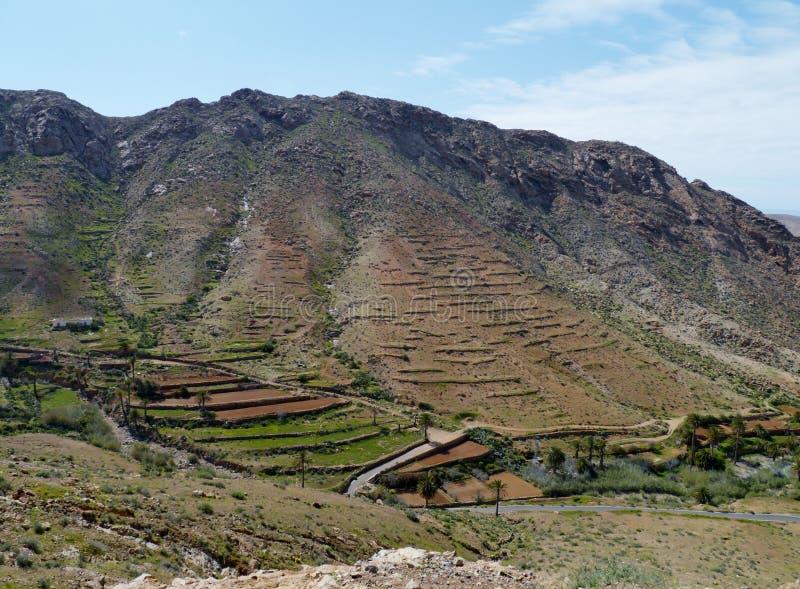 Buen Paso con le palme su Fuerteventura immagine stock
