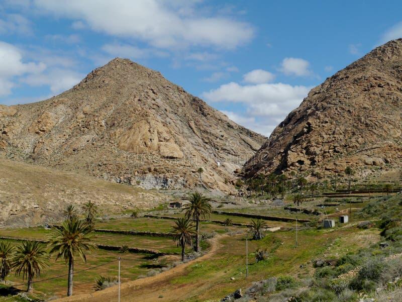Buen Paso met palmen op Fuerteventura stock afbeeldingen
