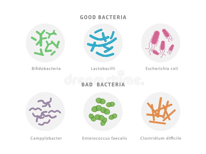 Buen y mún sistema bacteriano del icono de la flora aislado en el fondo blanco Ejemplo médico del concepto del dysbiosis de la tr stock de ilustración