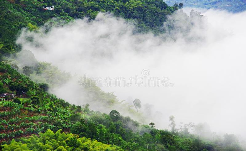 Misty landscape in Buenavista, Quindio. Buenavista is a municipality in the south-central part of the department of Quindio, Colombia. It is known and named for royalty free stock image