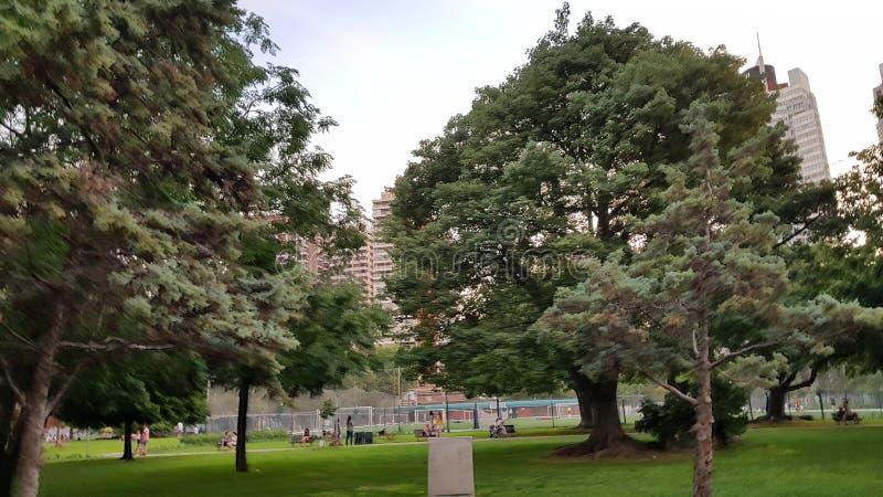 Buenos Aires Argentina trädCentral Park träd och naturlig luft av New York royaltyfria foton
