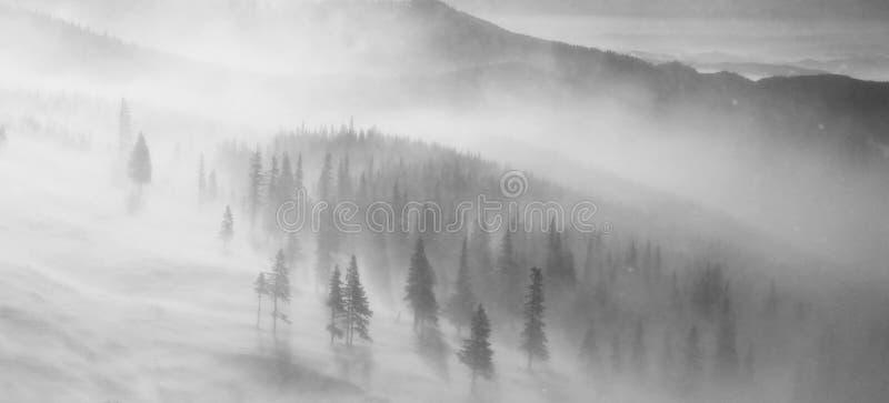 Bufera di neve della forte nevicata sul pendio di montagna immagini stock libere da diritti