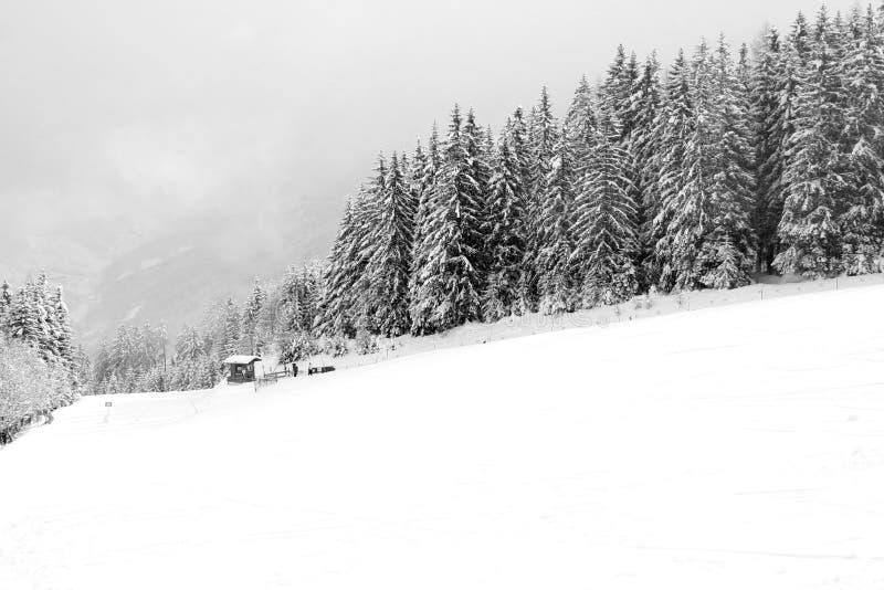 Bufera di neve della neve di inverni fotografia stock libera da diritti