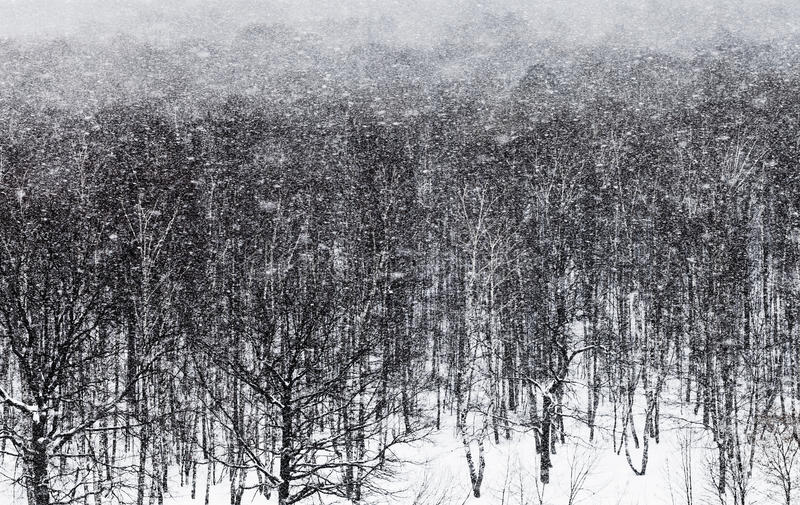 Foresta della quercia del ander della bufera di neve della neve immagini stock libere da diritti