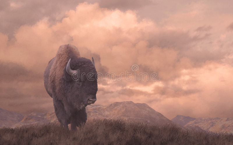 Buffalo immagine stock