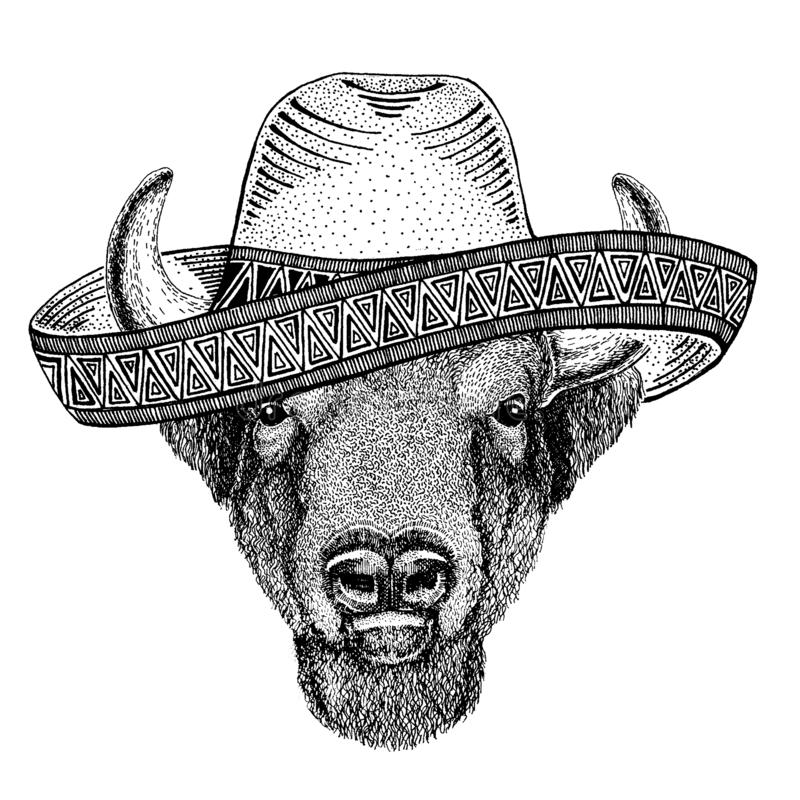 Buffalo, bison,ox, bull wearing traditional mexican hat. Classic headdress, fiesta, party. Buffalo, bison,ox, bull wearing traditional mexican hat. Classic vector illustration