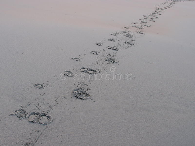 Buffalo foot prints on sand stock images