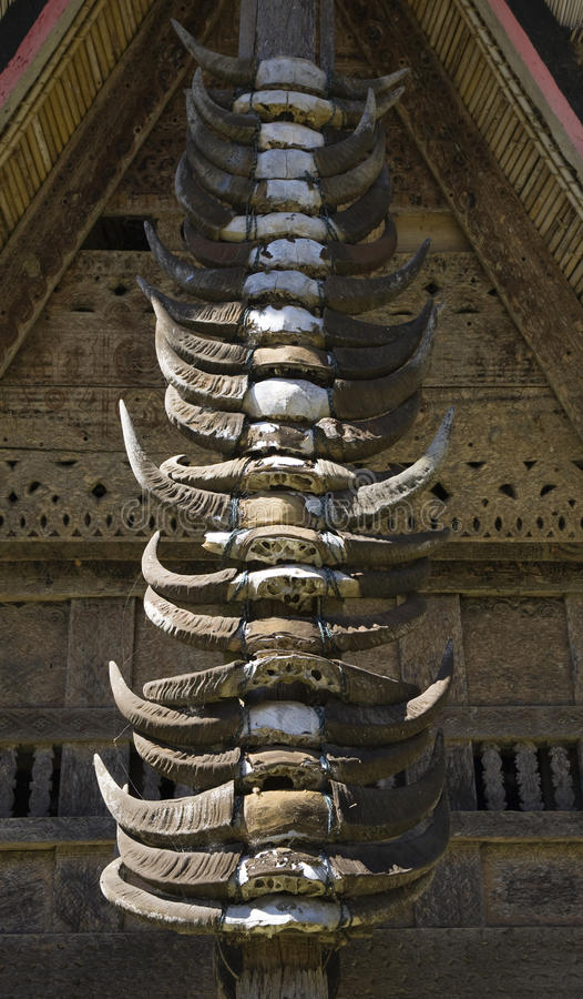 Free Buffalo Horns Stock Image - 16115611
