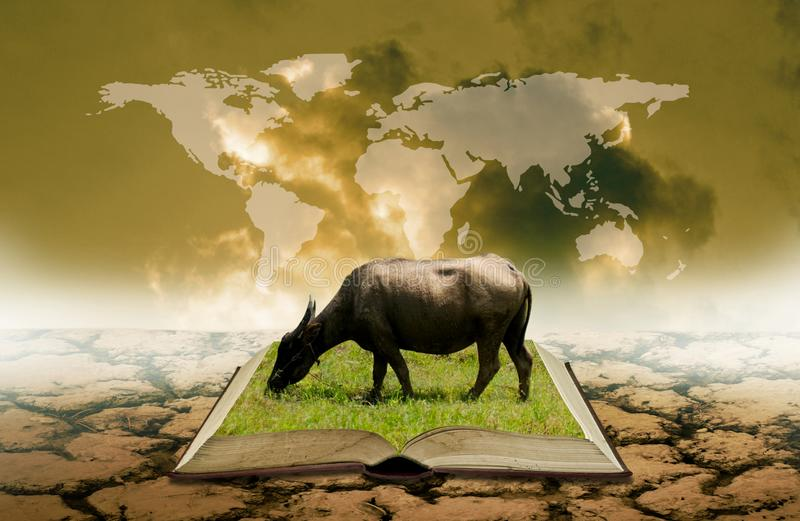 Buffalo on open book at dry land with world map overlay on sky royalty free stock photo