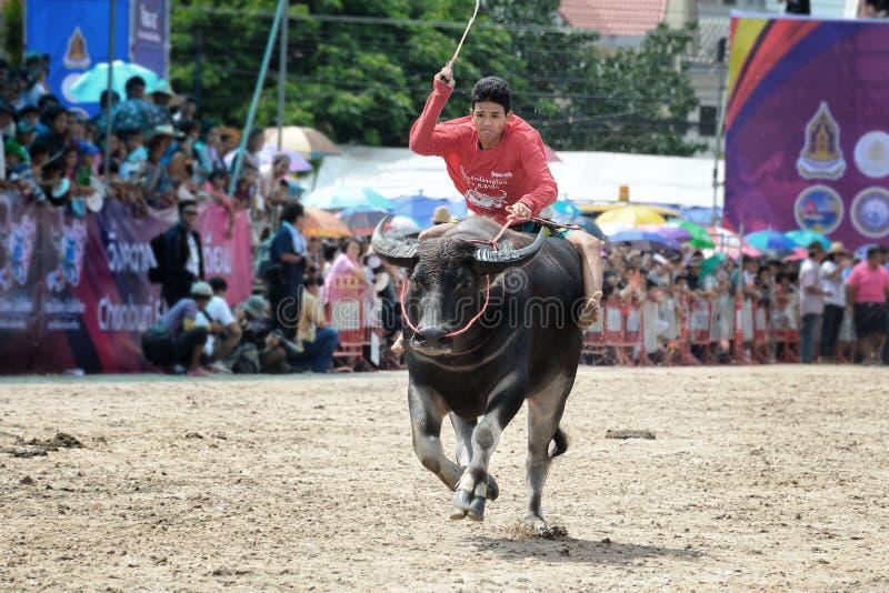 Buffalo Racing Festival