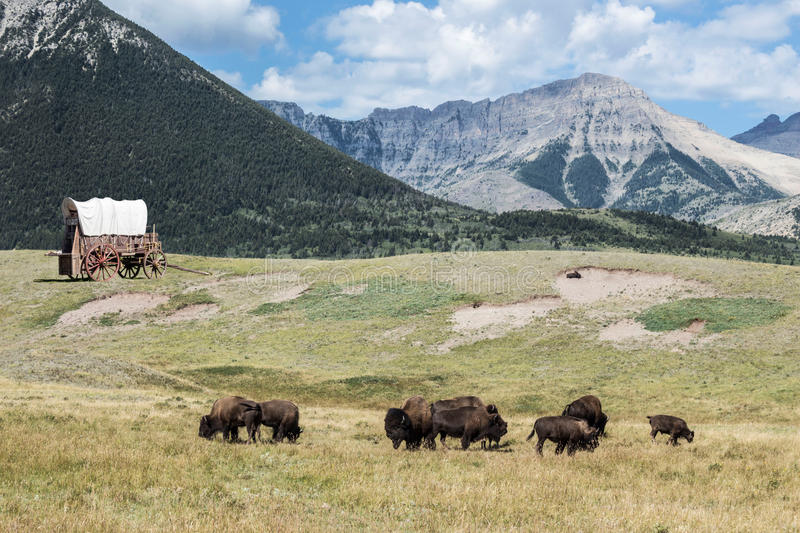 Buffalo roaming the land with a covered wagon sitting in the field with mountains looming. Horizontal image of buffalo roaming the fields with an old covered royalty free stock photos